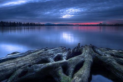 lake nature water sunrise landscape bay washington still nikon scenery mt natural cloudy union logs peaceful calm mount rainier area wa serene hdr d40 dwcfflandscape