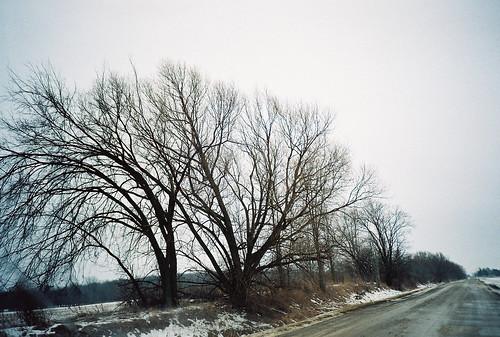 road trees winter snow film ice 35mm lomography michigan lomolca 35mmfilm