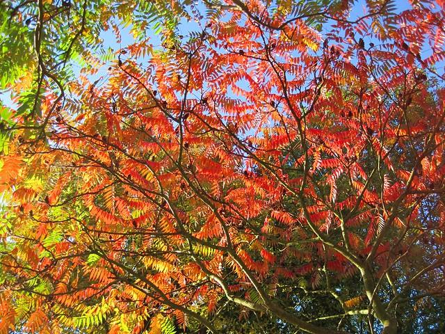 Herbstbaum im Sonnenlicht