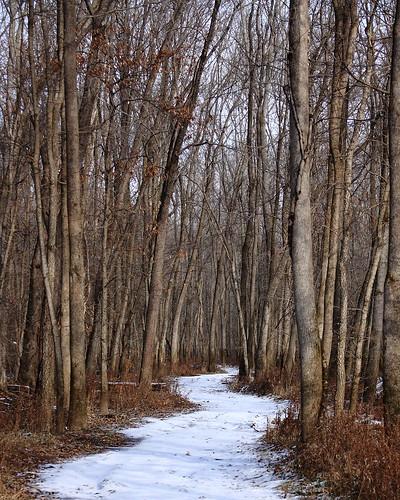 trees snow canon illinois woods midwest december stlouis troy trail 2010 scurve rebelxs eos1000d