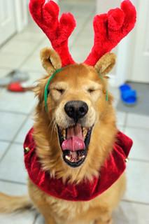 Reindeer Pocky | by pocky910
