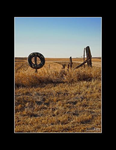 grass fence cornfield farm tire barbedwire keepout mzuiko1442mm olympusepl1