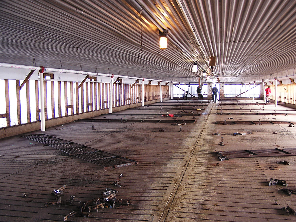 Conversion from gestation stalls to group housing at a Smi