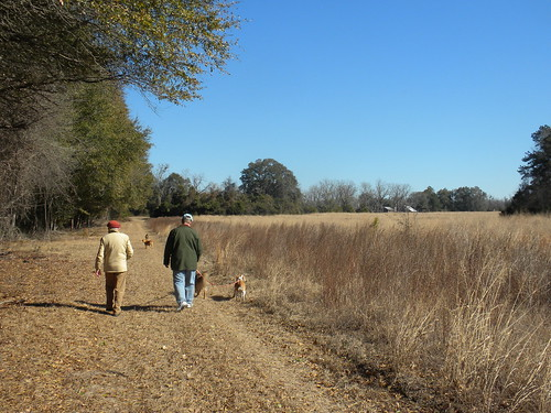 outing walk country rural orangeburg rowesville farm field barns sheds roof dogs winter chilly sunny bright blue sky january meadow memory clear chill cold exercise southern tree grass quercus oak andropogon poaceae azul