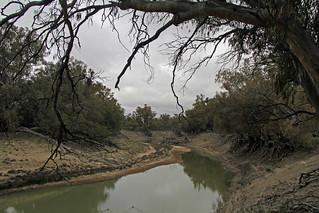 Darling River - Kinchega National Park   by iansand