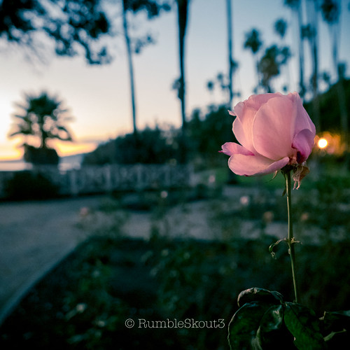 _1110898 | by RumbleSkout3