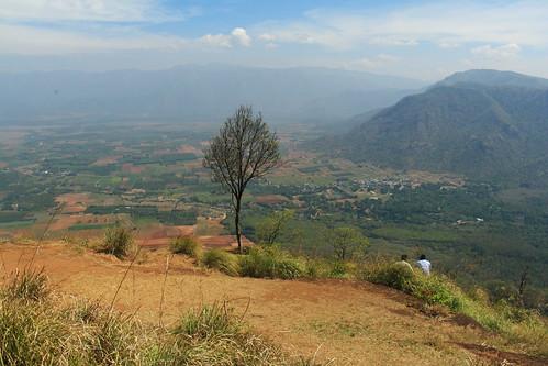 farms aerial trees idukki kerala india ind