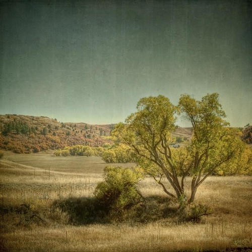 autumn trees fall square landscape golden colorado hdr resevoir textured castlewoodcanyon caono texturesquared t1i