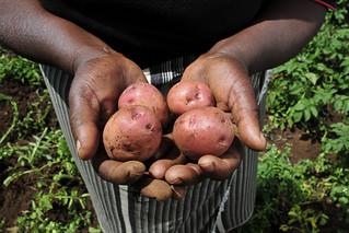 2DU Kenya66 | by CIAT International Center for Tropical Agriculture