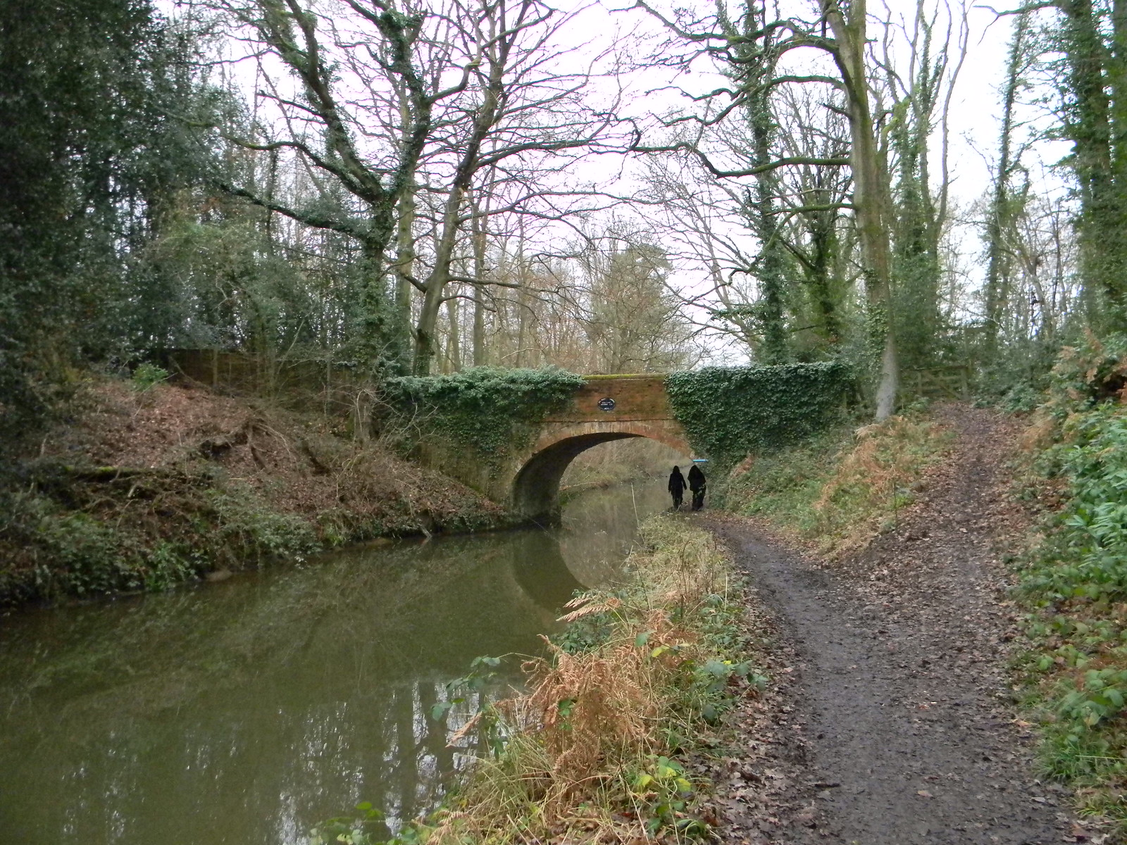 Basingstoke Canal -Basely's Bridge Winchfield Circular
