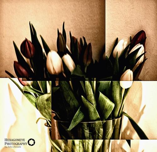 28/365 Tulips | by Hexagoneye Photography