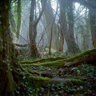 Woods near Plumpton | by Derek King