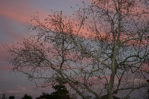 sky clouds sunrise florida