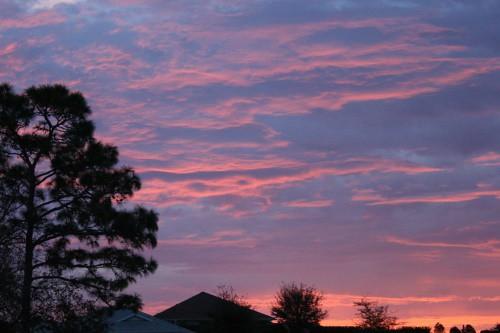 sky tree clouds sunrise dawn florida
