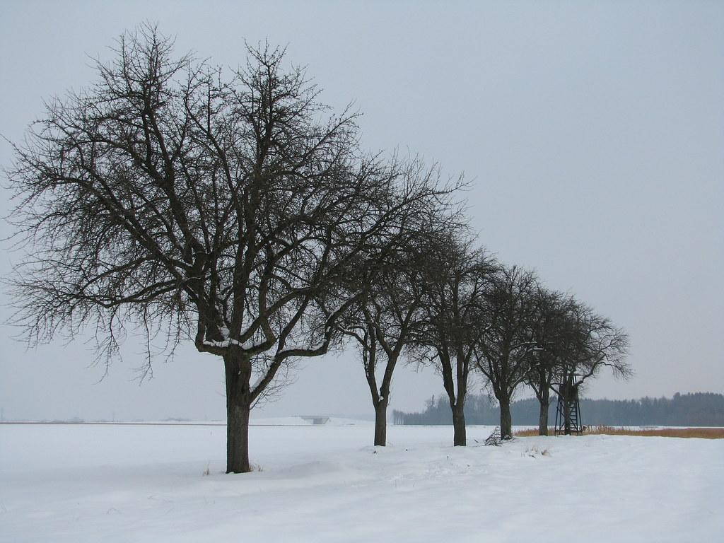 Winter Trees Stadlkirchen Austria Stadlkirchen Gemei Flickr