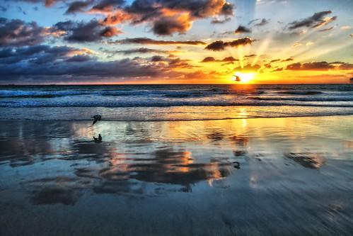 sunrise miami seagull miamibeach southbeach 305