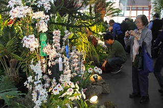 Pacific Orchid Exposition 2011 | by joeysplanting