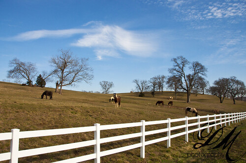 horses tennessee country nikond90 coldwatertennessee
