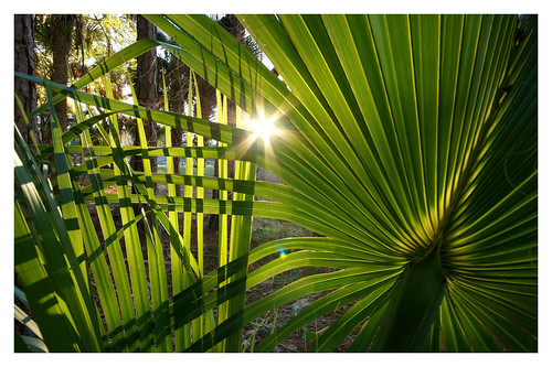 light sunset green palms back florida