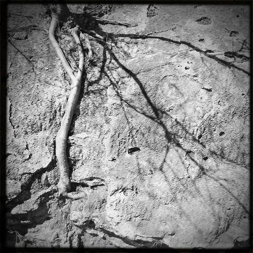 Raíces y Texturas en Hierve el Agua
