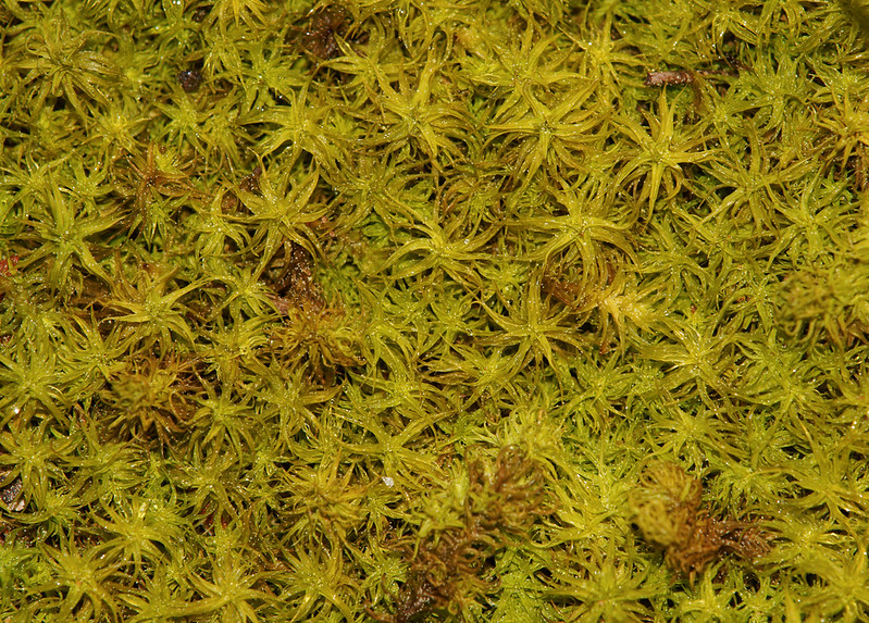 Últimos días del invierno - Texturas naturales - Musgo humedo