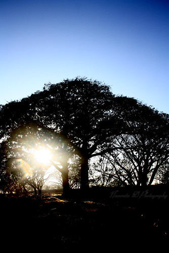 tree sunrise sihouette lalbagh