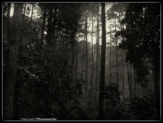 Hutan Rimba Belantara | Tody Suriatmojo | Flickr