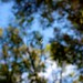 Repelling Oak Roller Caterpillars
