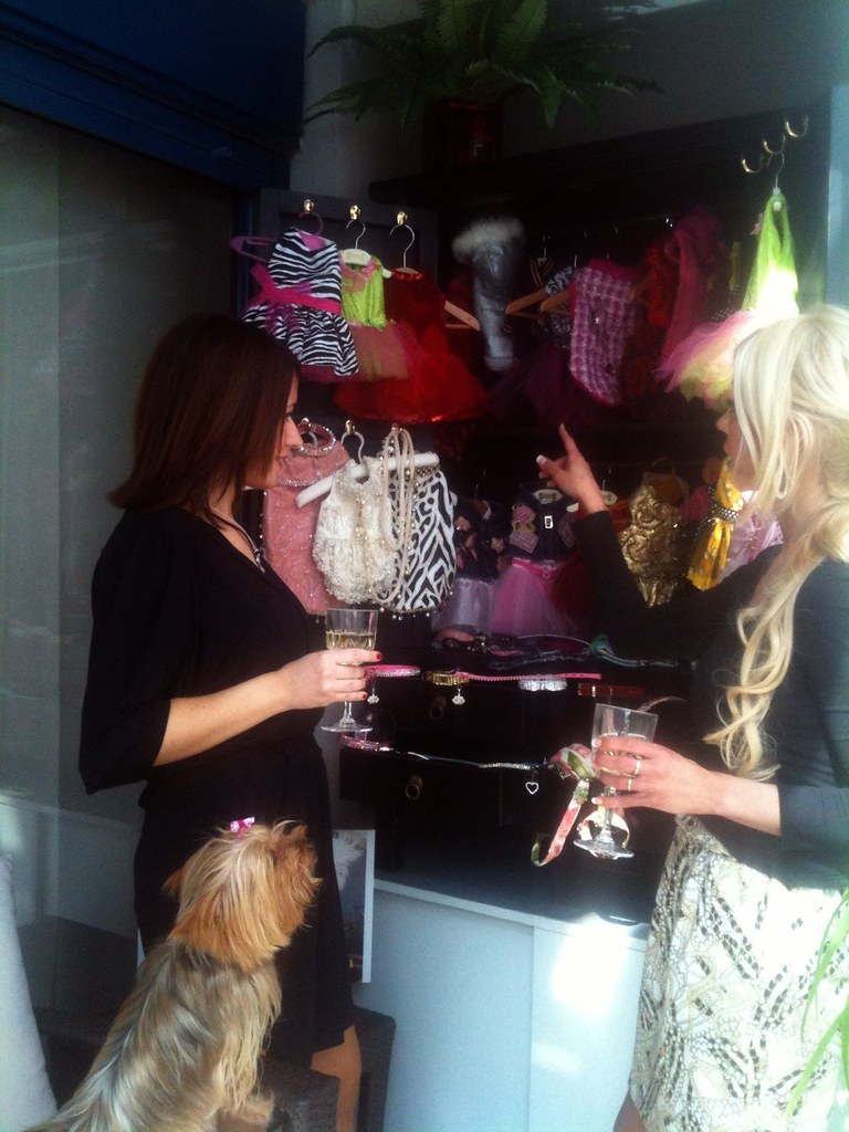 Haute couture for pampered dogs