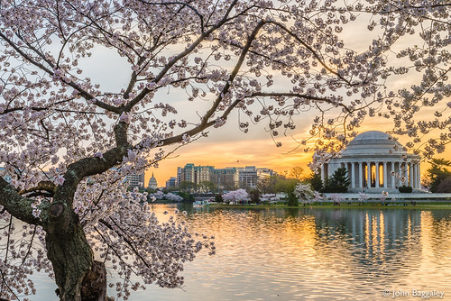 city horizontal architecture sunrise landscape outdoors landscapes spring outdoor historic cherryblossom government tonemapped