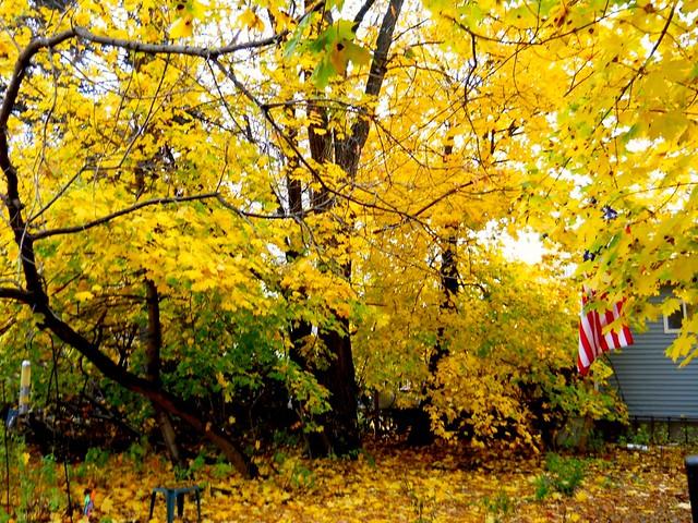 Autumn Color -TMT.
