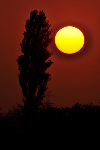 sunset japan twilight chiba 夕陽 sakura 500mm 2010 佐倉 印旛沼 nikond90 imbanumamarsh