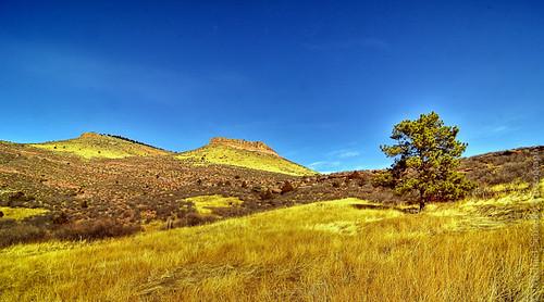 sun foothills tree nature colors grass landscape michael bush nikon colorado rocks lyon hills micha schaefer d300 hallranch ptf