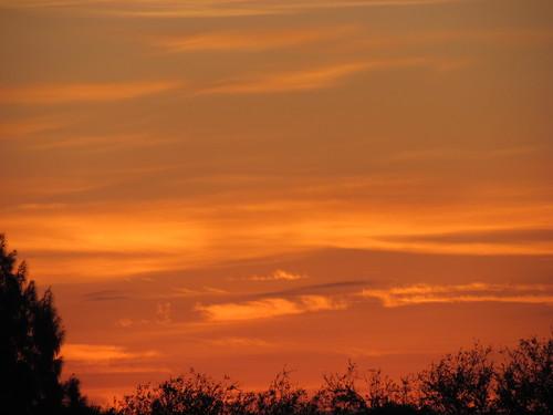 trees sky sun clouds sunrise golden skies