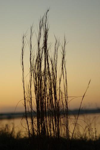 park sunset sky plant nature water grass silhouette georgia outdoors gold evening pentax dusk crookedriver k10d crookedriverstatepark tamronaf70300mmf456dildmacro photobymikewacht