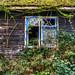 Abandoned Cottage, Felthorpe, Norfolk, U.K.