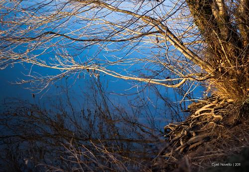 blue light sky landscape lumière bleu reflet ciel arbres paysages végétaux végétal cyrilbkl cyrilnovello