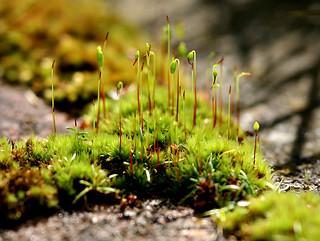 moss on the path | by ndrwfgg