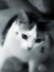 Ulla the cat
