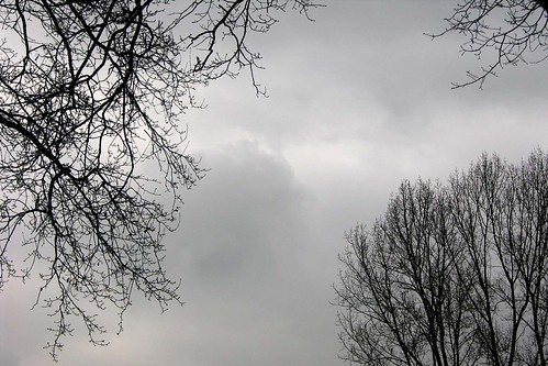 Tree VI