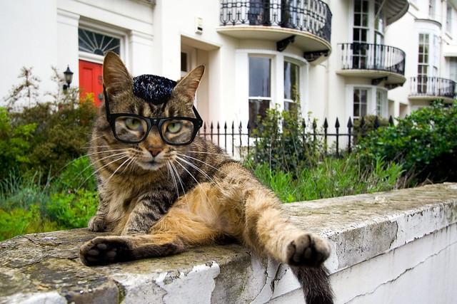 mild-mannered Clark Cat