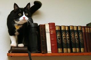 Matching the books | by Tommy Hemmert Olesen