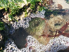 Tidepooling in Davenport