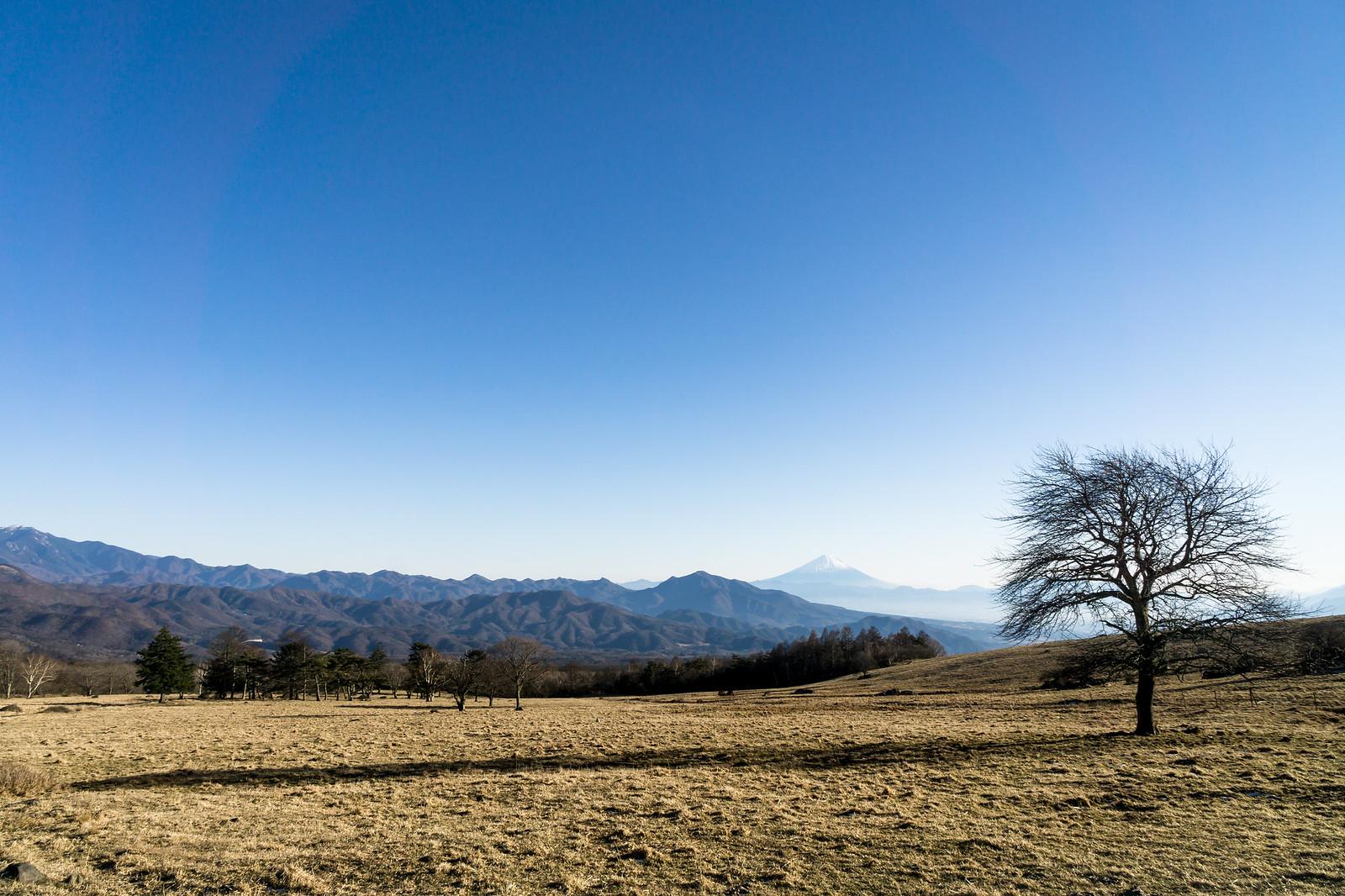 Yatsugatake farm_2