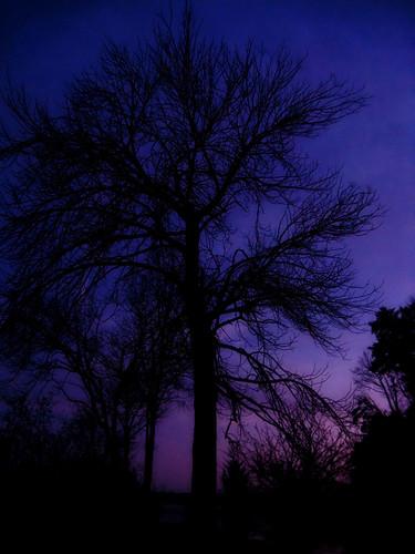 blue sunset tree silhouette purple ghostly easttn wattsbarlake springcitytn