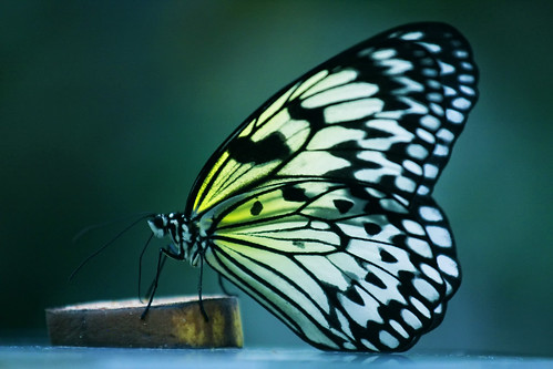 nature canon butterfly profile natura 70200 motyl colorphotoaward