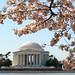 2011.03.29 ワシントンDCの桜(今年は99周年)