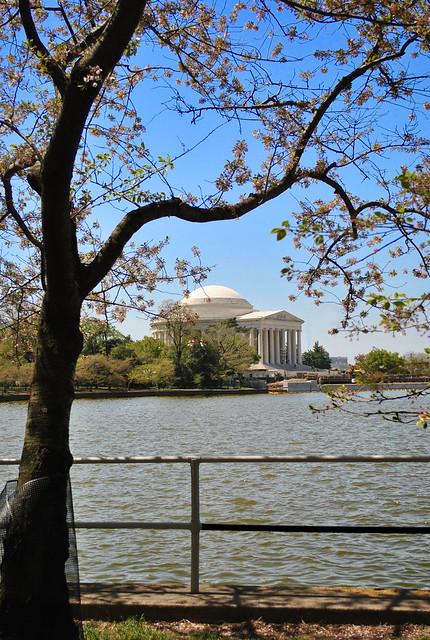 Jefferson Memorial & Tidal Basin