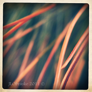 hipsta1 | by Joanna5600