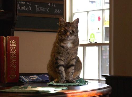 cambs - cat on bar in free press cambridge 08-7-06 JL